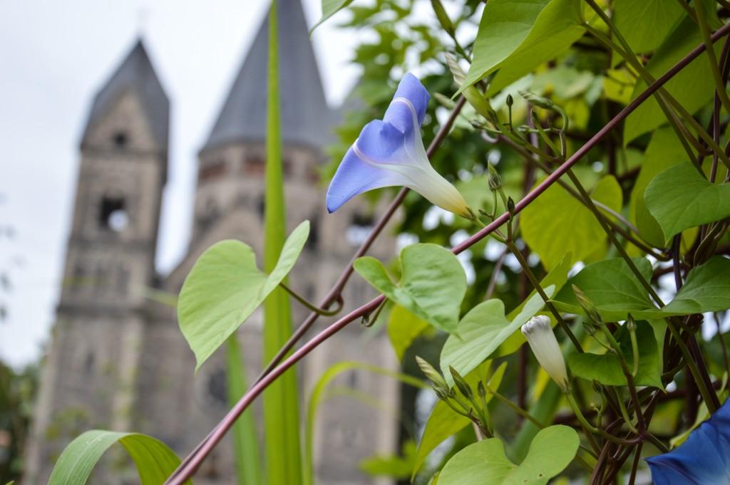 Fleur et cathédrale