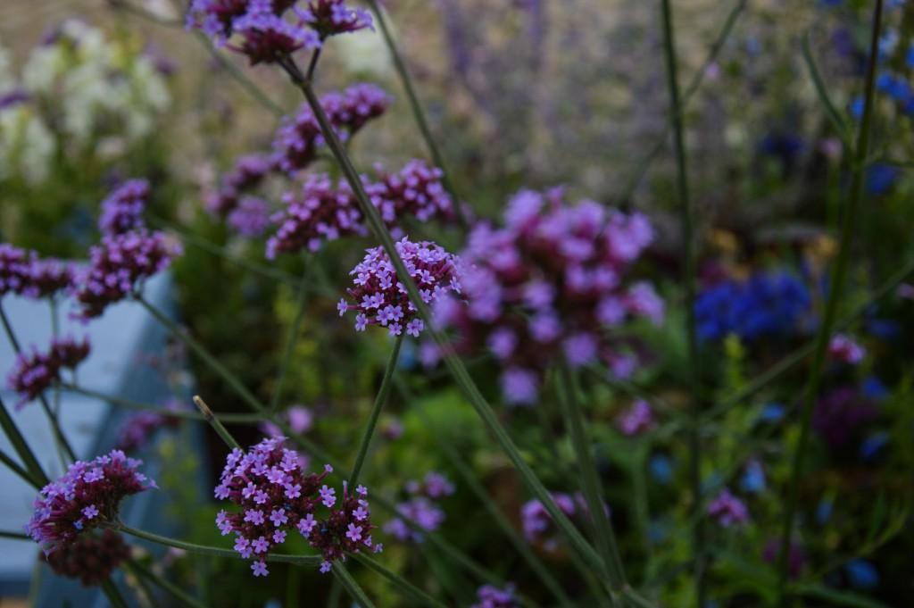 Fleurs en macro